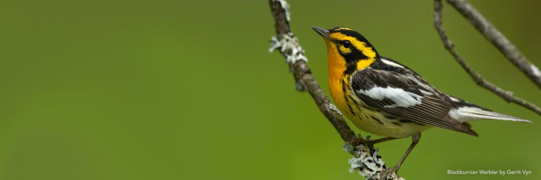 Lab of Ornithology Logo