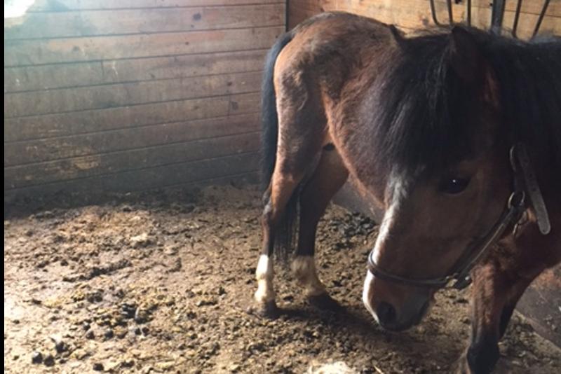 Donate to Saving Shamus - Hudson Valley SPCA - Orange County 2017-08-16 01:11