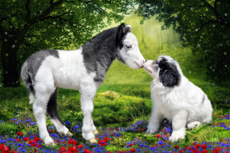 Gentle Carousel Miniature Therapy Horses Gentle Carousel