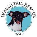 Waggytail Rescue Inc
