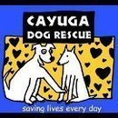 Cayuga Dog Rescue