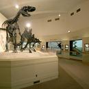 Michigan State University Museum
