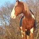 Godspeed Horse Hostel Inc