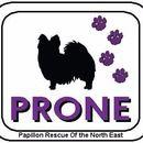 PRONE - Papillon Rescue Of the North East