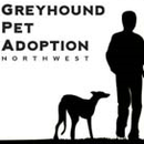 Greyhound Pet Adoption Northwest
