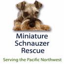 Miniature Schnauzer Rescue