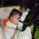 Gentle Carousel Miniature Therapy Horses