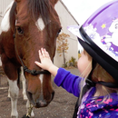Trotting Horse Therapeutic