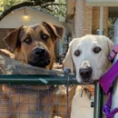 Charming Pet Rescue