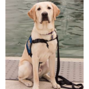 Guiding Eyes for the Blind at Ithaca College
