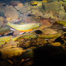 Massanutten Chapter of Trout Unlimited