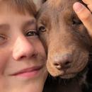 Adopt a Bulgarian Dog