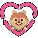 Recycled Pomeranians and Schipperkes Rescue