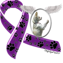 Paw Angel Animal Rescue