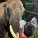 Myakka Elephant Ranch Inc