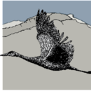 Bighorn Audubon Society