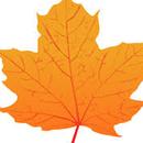 Maple Community Development Corp D/B/A Maple Leaf Academy
