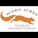 Acorn Acres Wildlife Rehabilitation