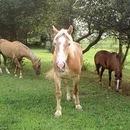 Gress Mountain Ranch