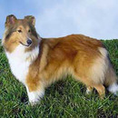 Secondhand Shelties Ltd