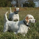 Illinois Birddog Rescue Inc